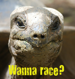 Tortoise: Wanna Race?